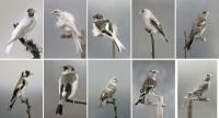 https://carolinanitsch.com/files/gimgs/th-118_118_hoe-000-birds-complete-2rows.jpg