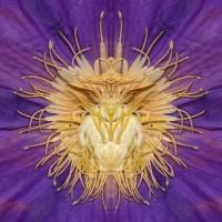 https://carolinanitsch.com/files/gimgs/th-21_21_purple-insect-large-12x12lores.jpg