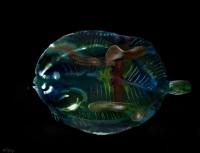 https://carolinanitsch.com/files/gimgs/th-291_ROC-0018-Untitled-Flounder_v2.jpg