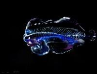 https://carolinanitsch.com/files/gimgs/th-291_ROC-0019-Untitled-Flounder-2_v2.jpg