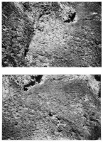 https://carolinanitsch.com/files/gimgs/th-46_46_wall-jeff-rock-surface.jpg